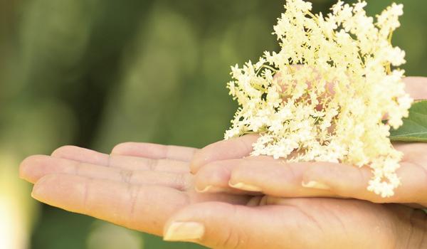 Holunderblüten Kosmetik aus eigener Herstellung
