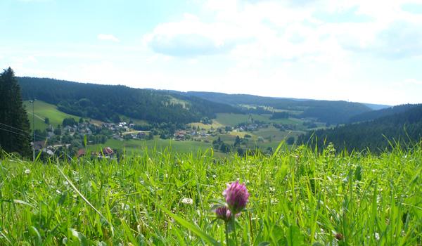 Elf Dörfer Weg rund um Höchenschwand