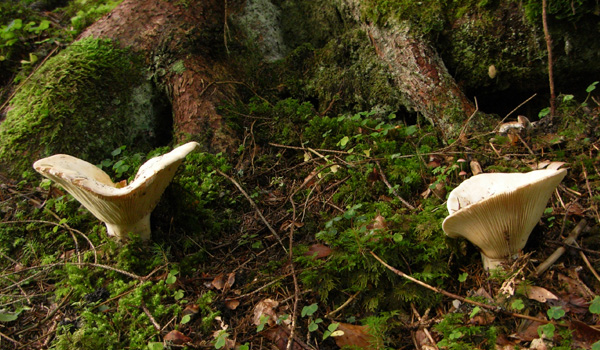 Waldlehrpfad bei Höchenschwand